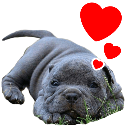 Sticker for Whatsapp DEPITBULLS PITBULL I love you  Pack of Stickers for WhatsApp DEPITBULLS Stickers de perros cachorros Pitbulls Picbull cahorro american bully enamorado love