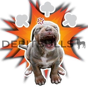 Pack of Stickers for WhatsApp DEPITBULLS Stickers de perros cachorros Pitbulls Picbull angry red nose