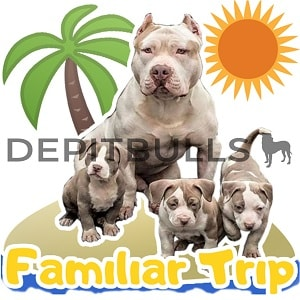 Pack of Stickers for WhatsApp DEPITBULLS Stickers de perros cachorros Pitbulls Picbull familia de perros pitbull trip