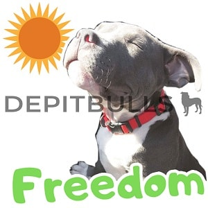 Pack of Stickers for WhatsApp DEPITBULLS Stickers de perros cachorros Pitbulls Picbull pitbull blue nose freedom