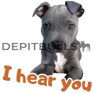 Pack of Stickers for WhatsApp DEPITBULLS Stickers de perros cachorros Pitbulls Picbull  cachorro pitbull black nose con mensaje i hear you