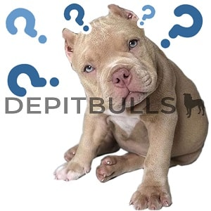 Pack of Stickers for WhatsApp DEPITBULLS Stickers de perros cachorros Pitbulls Picbull  cachorro red nose pensando question